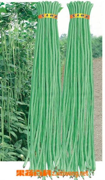 果蔬百科豇豆